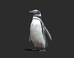 Magellanic Penguin - Animated 3D asset realtime