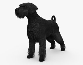 Schnauzer HD 3D model