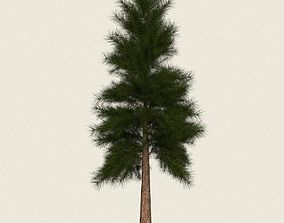 3D asset Game Ready Conifer Tree 09