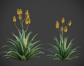 XfrogPlants Aloe Vera - Aloe Barbadensis 3D