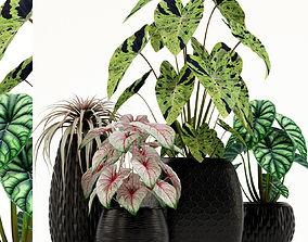 Plants collection 137 3D