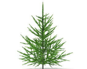 3D model Norway Spruce Picea abies 1m