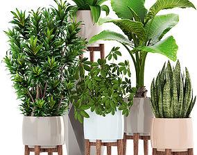 west Collection plants 3D model