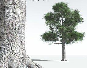 3D asset EVERYPlant English Oak LowPoly 12 --18