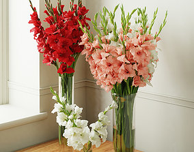 Gladiolus 2 3D model