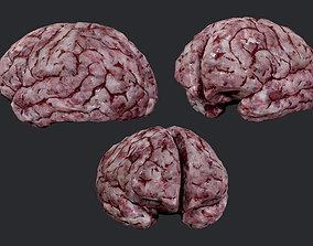 Human Brain Organ Game Ready 05 3D asset