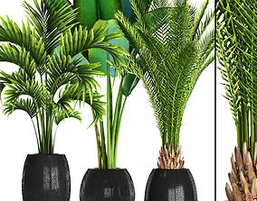3D Collection of tropical plants 3
