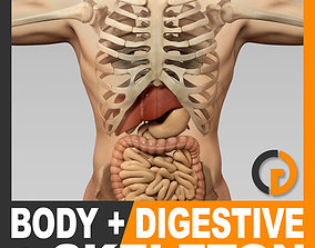 3D Human Male Body Digestive System and Skeleton - Anatomy