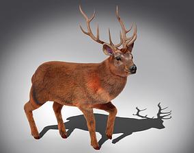 Fur Stag Deer Rigged 3D asset