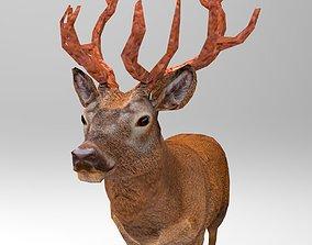 3D model VR / AR ready Red Deer Rigged