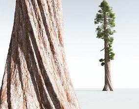 EVERYPlant Coastal Redwood 03 --12 Models--