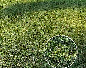 field Mowed lawn 3D model