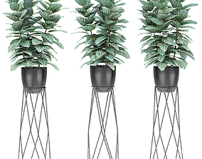 flowerpot 3D model Plant in Pot Flowerpot Exotic Plant