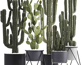 3D model Collection of Exotic Cactus Plants