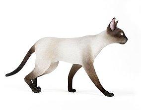 Animal Siamese Cat 3D model