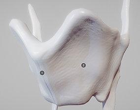 Thyroid Cartilage 3D asset