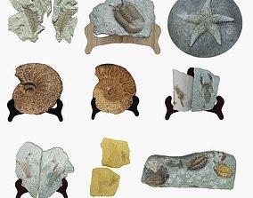 Fossil ornaments 3D