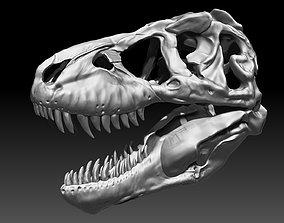 3D Tyrannosaurus Rex SUE Skull Set