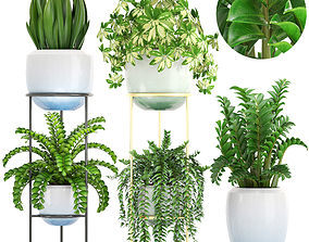 3D model arboricola Collection plants