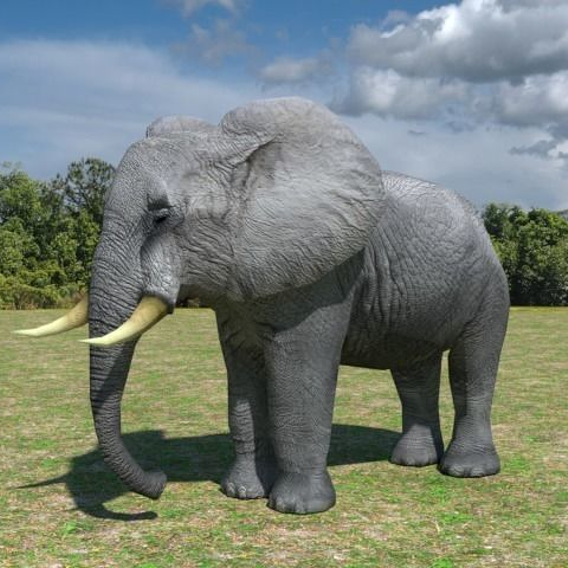 Low Poly African Elephant