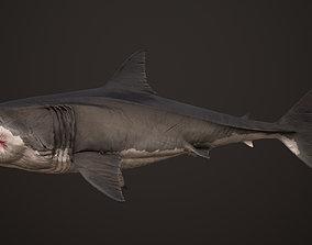 Great White Shark animals 3D model