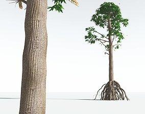 EVERYPlant Common Cordaites 05 --15 Models-- 3D