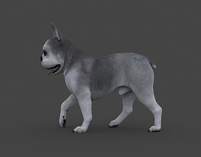 UVWD-012 Dog Textures Only 3D