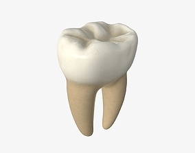 3D PBR Tooth molars
