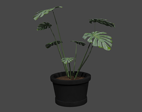 flora Monstera 3D model