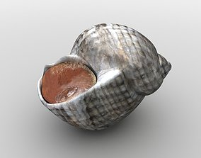 3D asset sea snail