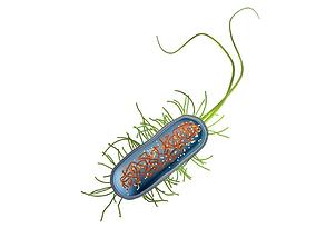 3D model Cut through bacteria