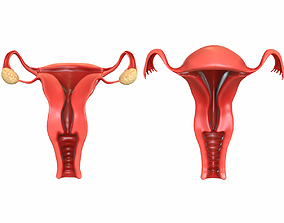 Female Reproductive System 3D animated