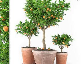 3D model Plants Set 04