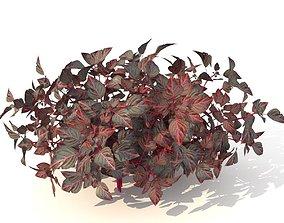 3D asset barberry