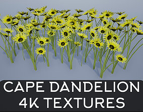 3D asset 4K Cape Dandelion Flower Plant