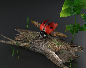 3D model INSECTS ladybugs lady flowers beetles