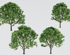 Alder Trees 3D