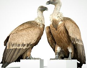Vulture 3D printable realistic