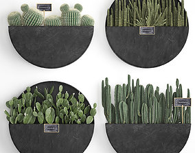Cactus set wall decor vertical garden 55 3D model