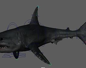 Shark 3D animated