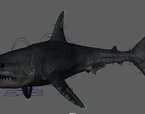 Shark shark 3D model animated