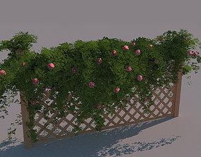 climbing rose 3D asset