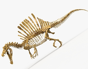 Spinosaurus dinosaur skeleton 3D