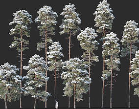 3D Pinus sylvestris Mega Collection Winter 12 models