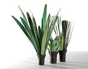3D model Exotic Plants in Pots