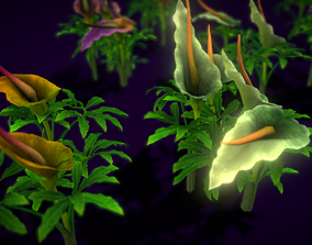Flower Dracunculus Species 3D model