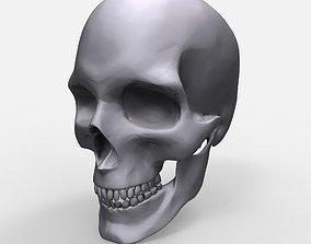 Skull Anatomy Model Printable