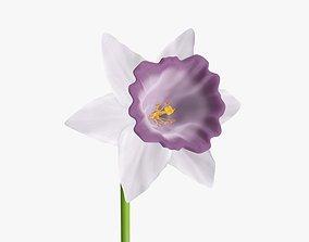Narcissus flower single - purple plant 3D