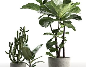three Cactus and Ficus in Pots 3D