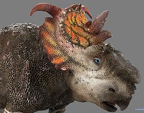 Pachyrhinosaurus 3D asset
